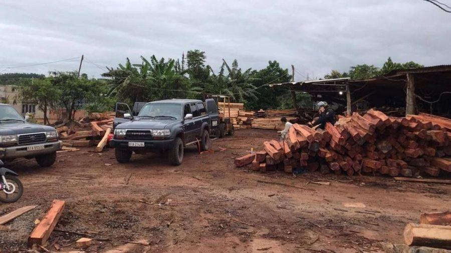 Tạm giam giám đốc doanh nghiệp gỗ để điều tra gần 200m3 gỗ lậu