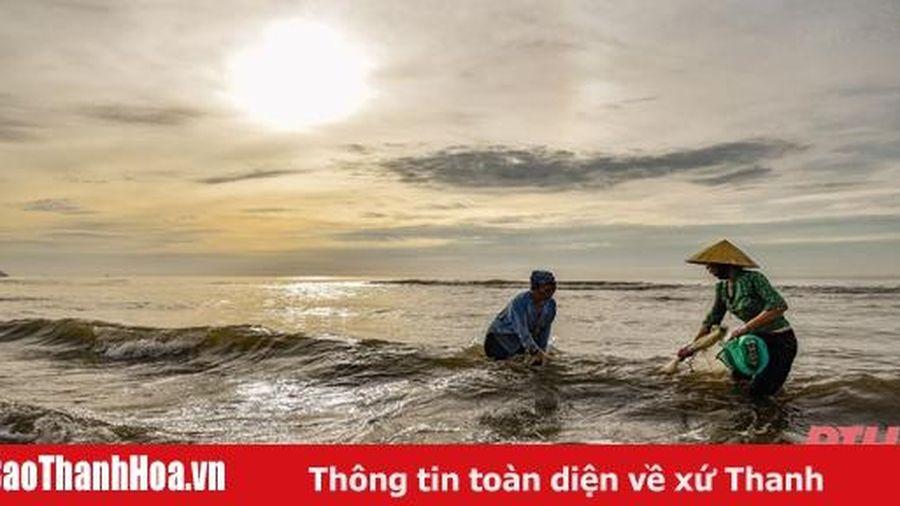 Mùa cào dắt biển