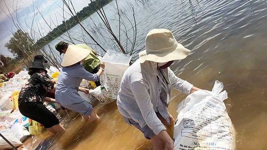 Thả trên 2,3 tấn cá bảo vệ môi trường lòng hồ Trị An