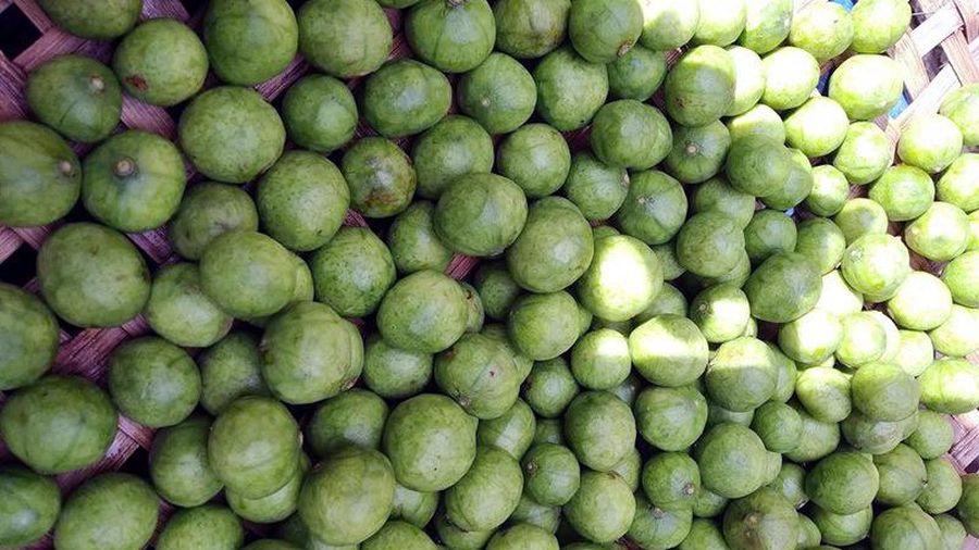 Đặc sản Hà Nội hết mùa, mua gom cả tạ cấp đông ăn dần