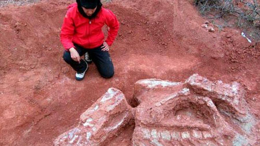 Phát hiện hóa thạch khủng long có niên đại hơn 200 triệu năm