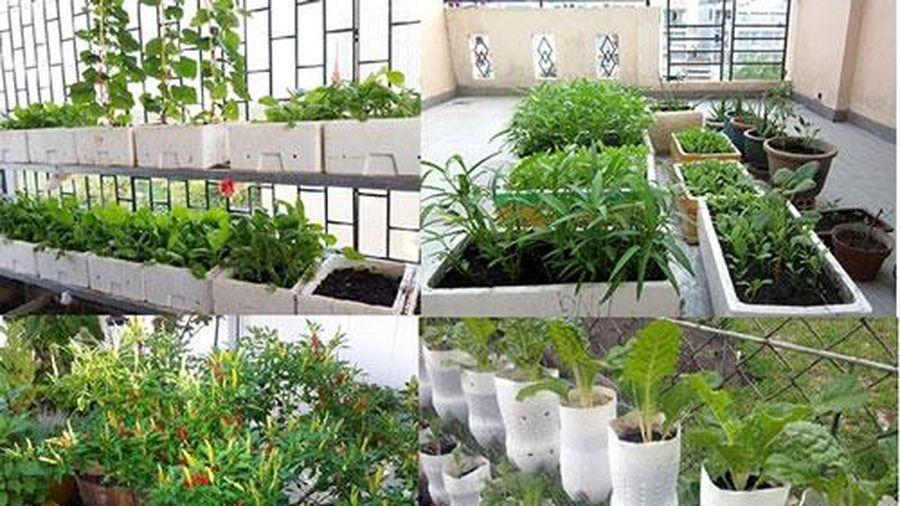 CLIP: Top 10 loại rau 'lớn nhanh như thổi' dễ trồng tại nhà