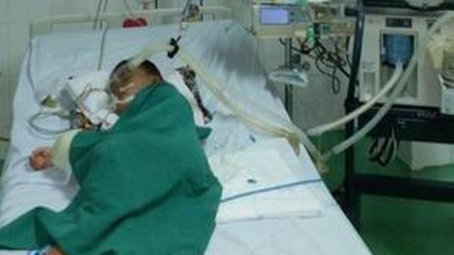 Nghịch tổ ong vò vẽ, một bé trai 4 tuổi bị đốt hơn 80 mũi