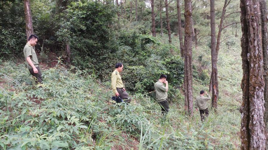 Xây dựng vành đai rừng gỗ lớn