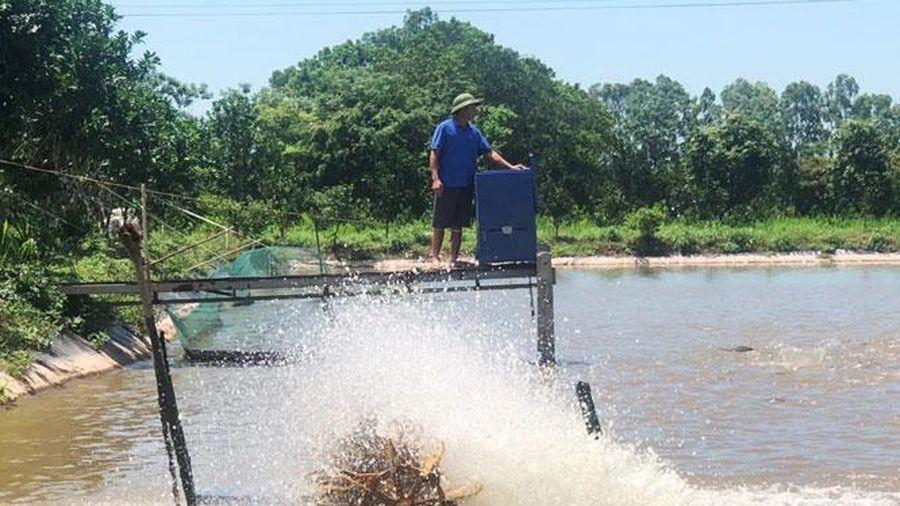 Nuôi trồng thủy sản ở Hà Nội: Phát triển bền vững theo hướng thâm canh