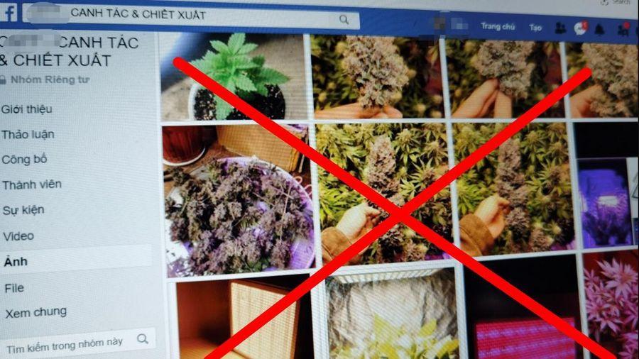Nhiều nhóm kín độc hại, phi pháp trên Facebook ở Việt Nam