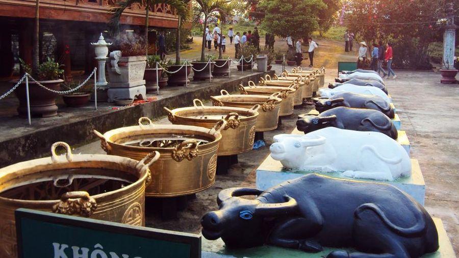 Người Thái Nghệ An và tín ngưỡng về con trâu