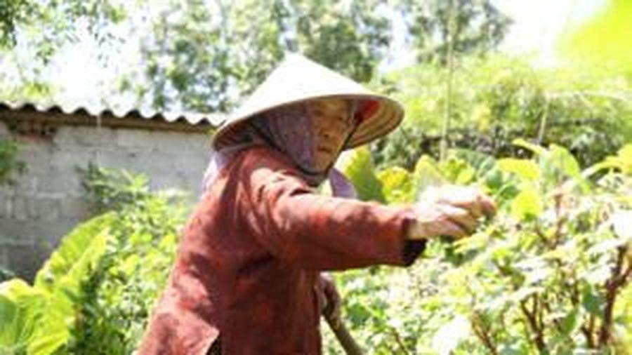 Cụ bà gần 90 tuổi vẫn phăng phăng đi cấy, trồng rau khiến giới trẻ xách dép' đuổi theo: 'Các cháu chưa chắc đã bằng tôi, còn khỏe tôi còn làm'