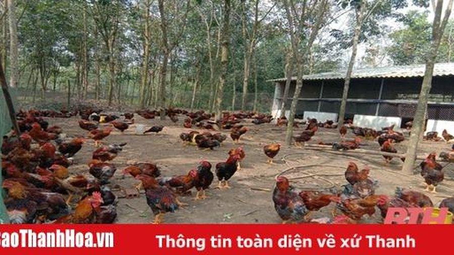 Hiệu quả ứng dụng công nghệ sinh học trong chăn nuôi và trồng trọt tại huyện Cẩm Thủy