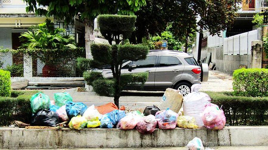 Vứt rác bừa bãi ra dải phân cách