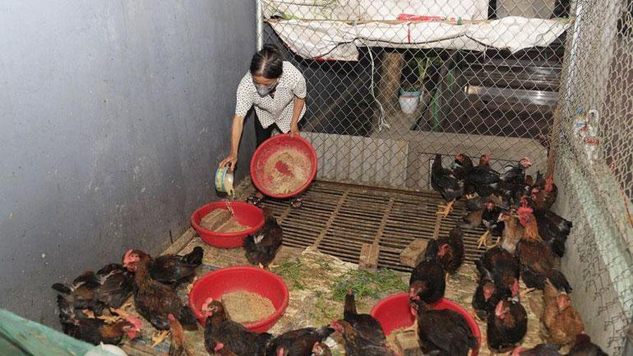 Hướng tới phát triển chăn nuôi bền vững