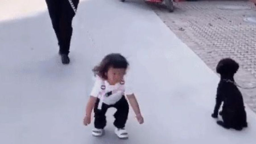 Đang dạo chơi trên đường bỗng dưng nhìn thấy một chú chó, hành động của con gái nhỏ khiến bố phát hoảng