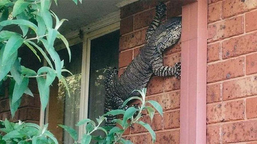 Những hình ảnh rùng rợn về thiên nhiên Úc khiến người 'thần kinh thép' cũng khiếp sợ