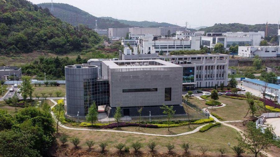 Báo Anh: Virus giống Covid-19 đã được gửi đến Vũ Hán vào năm 2013