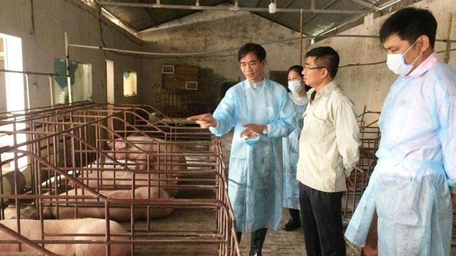 Chi cục Chăn nuôi và Thú y Hà Nội: Làm tốt công tác chăn nuôi, phòng chống dịch bệnh