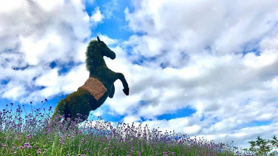 Tháng 7 này đừng bỏ lỡ giải đua ngựa cực chất tại Sa Pa