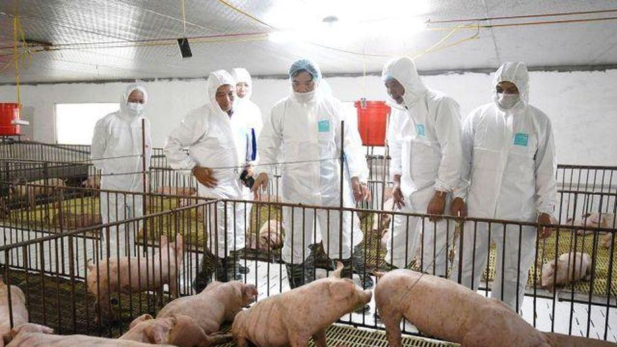 Bộ trưởng Nguyễn Xuân Cường: Tăng nhanh đàn giống để khôi phục chăn nuôi lợn