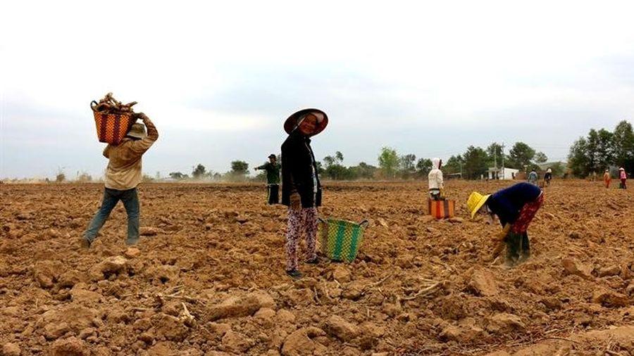 Khởi động chương trình nâng cao sức khỏe người di cư Việt Nam