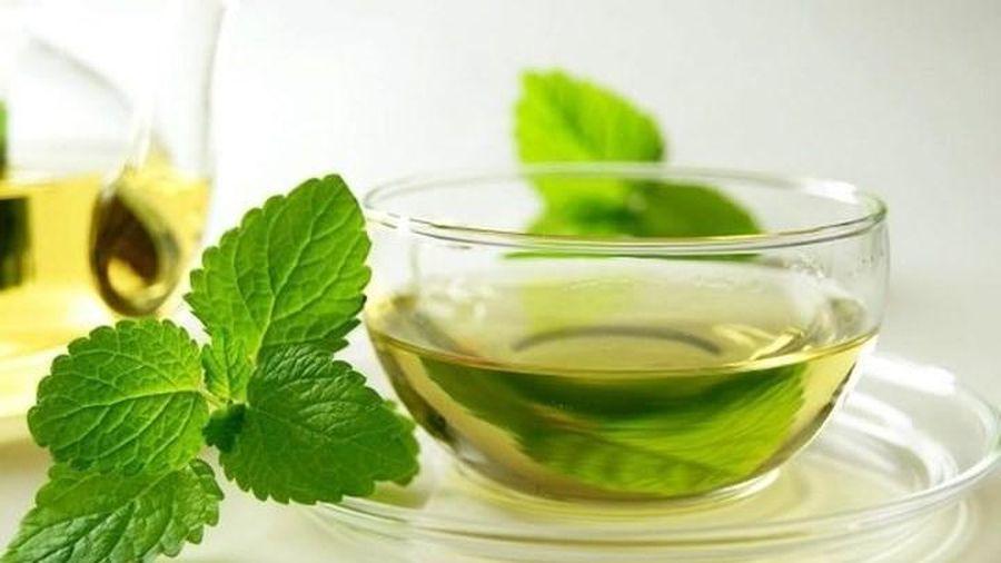 Khảo sát quá trình chế biến trà túi lọc bạc hà (Mentha piperita L.)