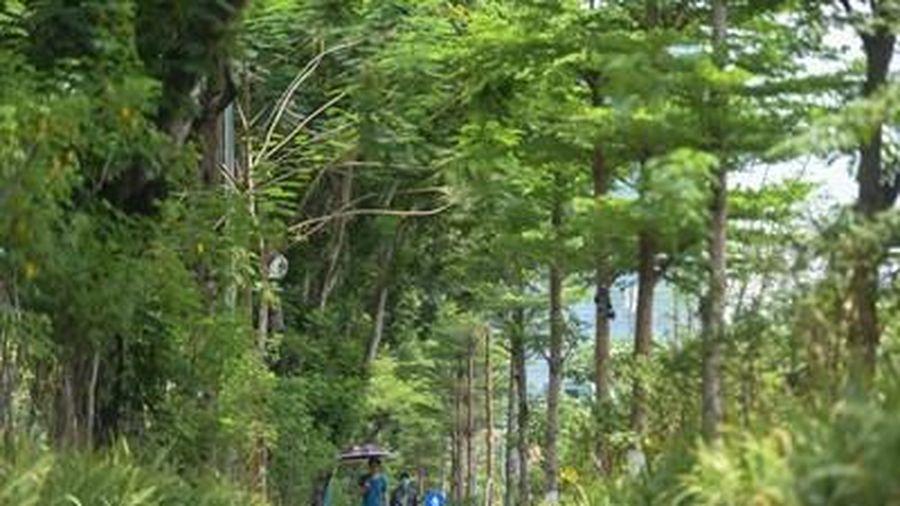 Hà Nội đổi thay khi có thêm 600.000 cây xanh