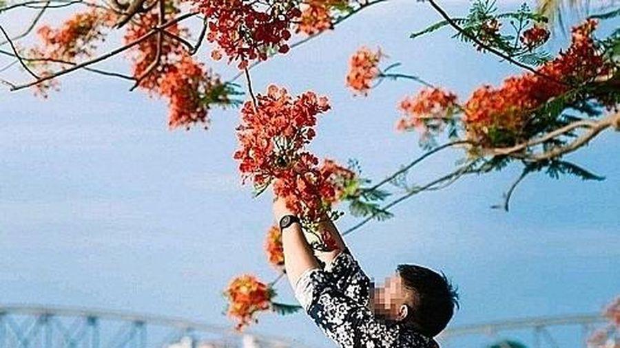 Xử phạt đối với hành vi ngắt hoa, bẻ cành cây xanh đô thị