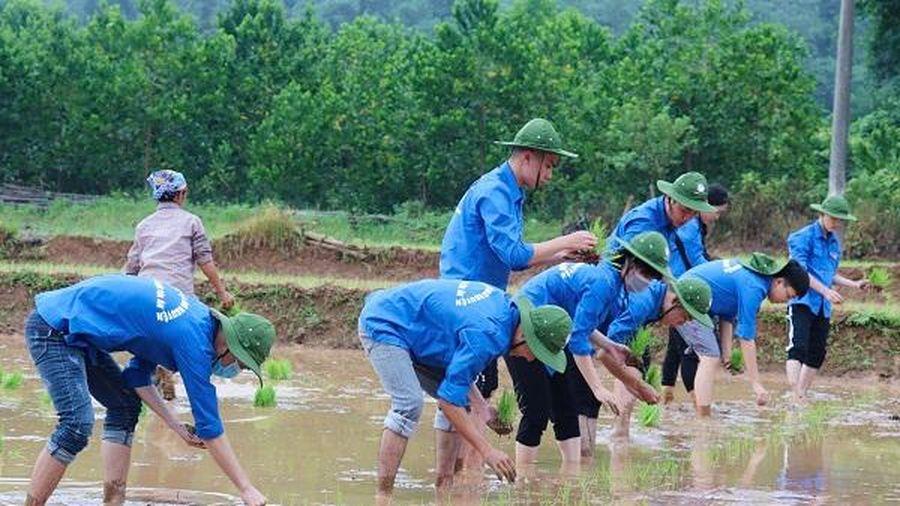 Sinh viên Học viện Tòa án tham gia cấy lúa cho bà con nông dân ở Hòa Bình