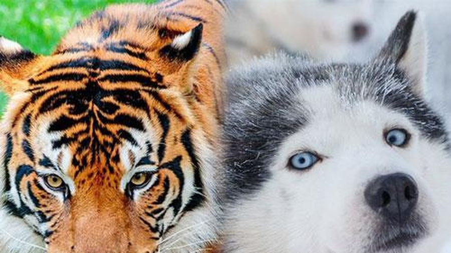 16 loài động vật quyến rũ nhất hành tinh thông qua cuộc bình chọn của 170.000 người