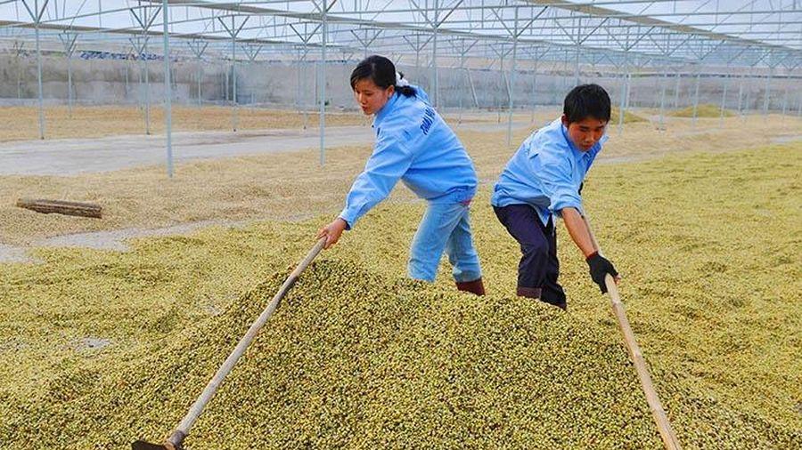Mở rộng dư địa xuất khẩu sang thị trường Trung Quốc