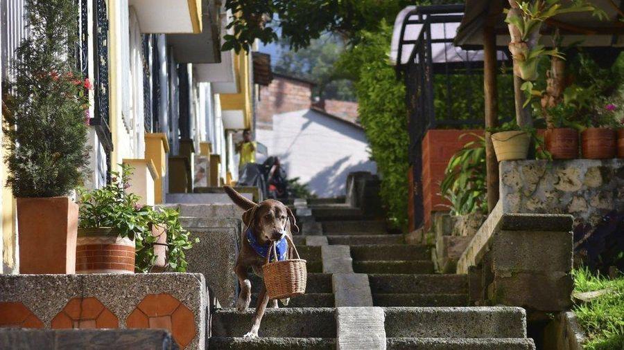 Chó làm shipper trong dịch COVID-19