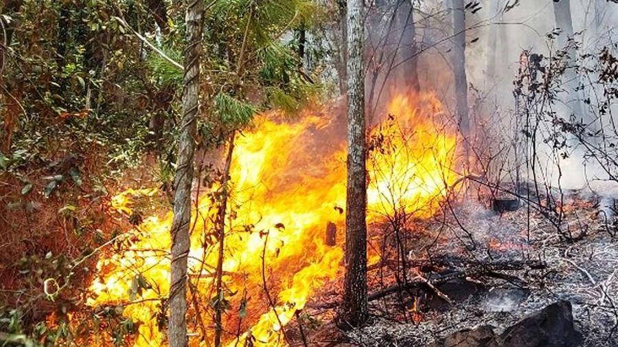 Lại cháy rừng ở Diễn Châu