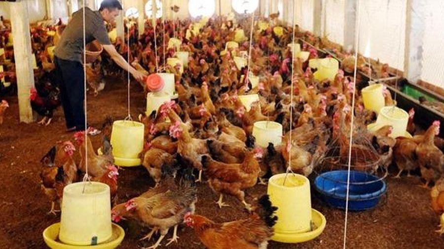 Thái Nguyên: Lao động nông thôn thoát nghèo từ Đề án 1956