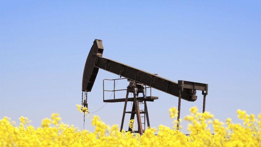 Giá dầu thô bật tăng trở lại, dự báo nhu cầu sử dụng dầu thô tăng