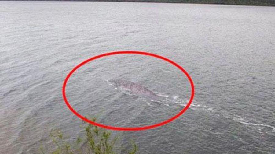 Quái vật hồ Loch Ness quay trở lại?