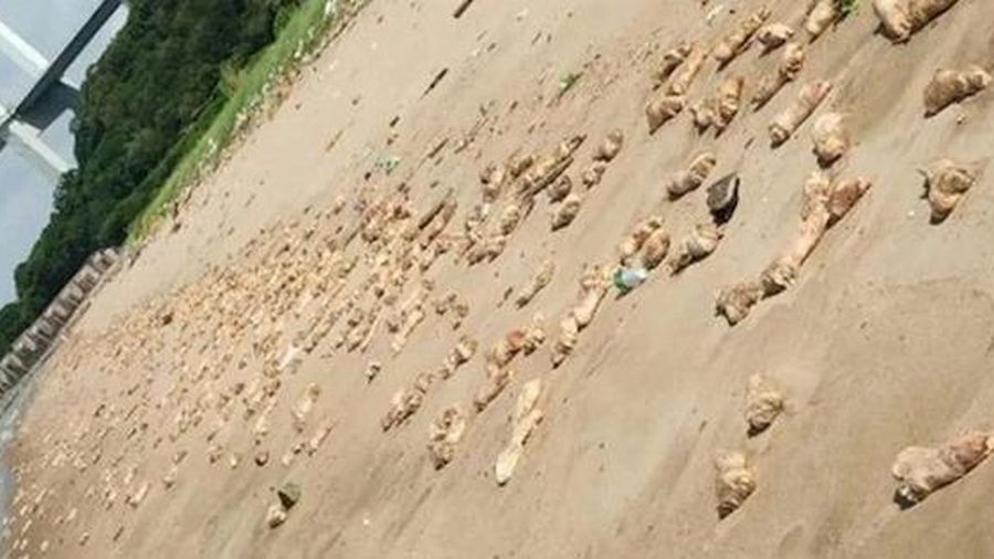 Bí ẩn hàng ngàn chân giò lợn dạt vào bãi biển ở Trung Quốc