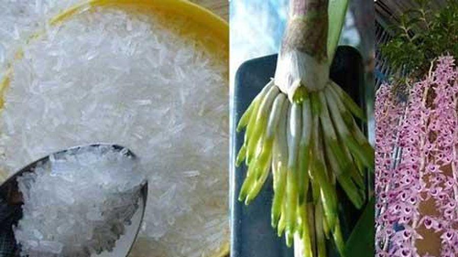 Dùng mì chính tưới lan, cây 'suy dinh dưỡng' bỗng ra rễ chi chít, hoa nở bung tuôn dài như suối