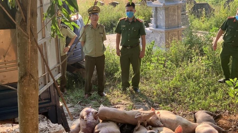 Bắc Giang: Phát hiện 21 con lợn bị nhiễm tả lợn châu Phi chuẩn bị đưa đi tiêu thụ
