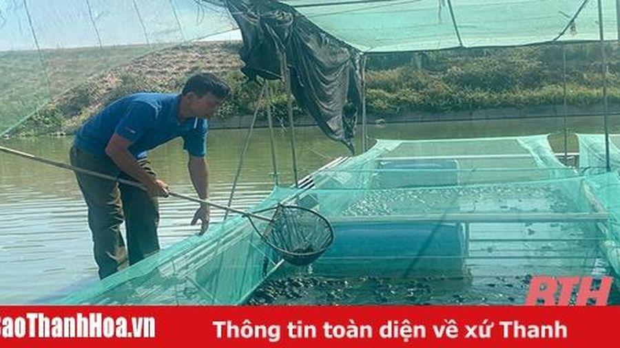Hiệu quả mô hình nuôi ếch bằng lồng lưới tại xã Quảng Phú