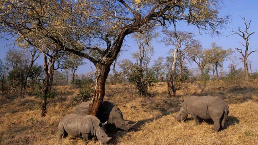 Giảm một nửa vụ săn trộm tê giác Nam Phi trong sáu tháng