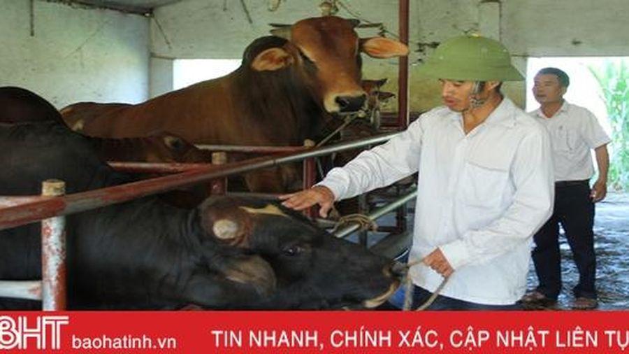 Giám đốc HTX doanh thu hơn 15 tỷ/năm ở Hà Tĩnh khởi nghiệp... từ 2 triệu đồng