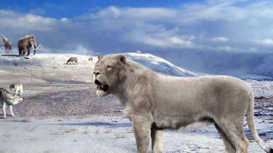 Hồi sinh xác ướp sư tử 50.000 tuổi 'ngủ quên' dưới lớp băng vĩnh cửu