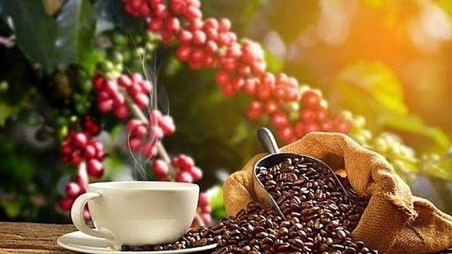 Giá cà phê hôm nay 2/8: Tăng nhẹ cả trong nước và thế giới