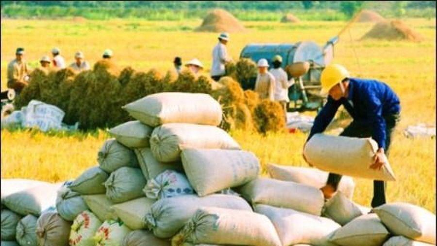 Có thể xuất khẩu 80.000 tấn gạo mỗi năm sang EU với thuế suất 0%