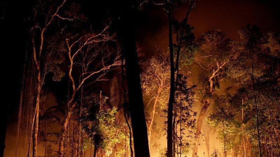 Cháy rừng Amazon báo động đến mức không thể kiểm soát