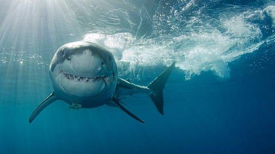 Lầm tưởng của con người về sự khát máu của cá mập