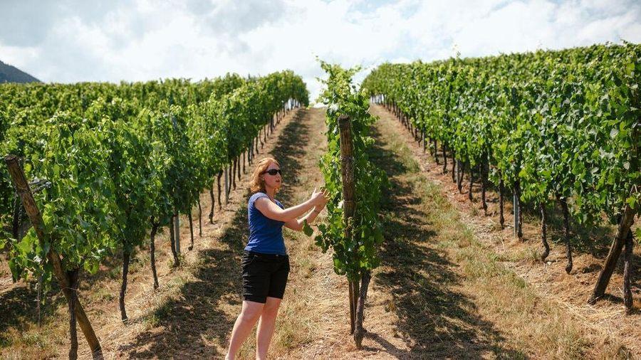 Rượu vang Pháp hóa nước rửa tay và trái tim tan nát của người nông dân