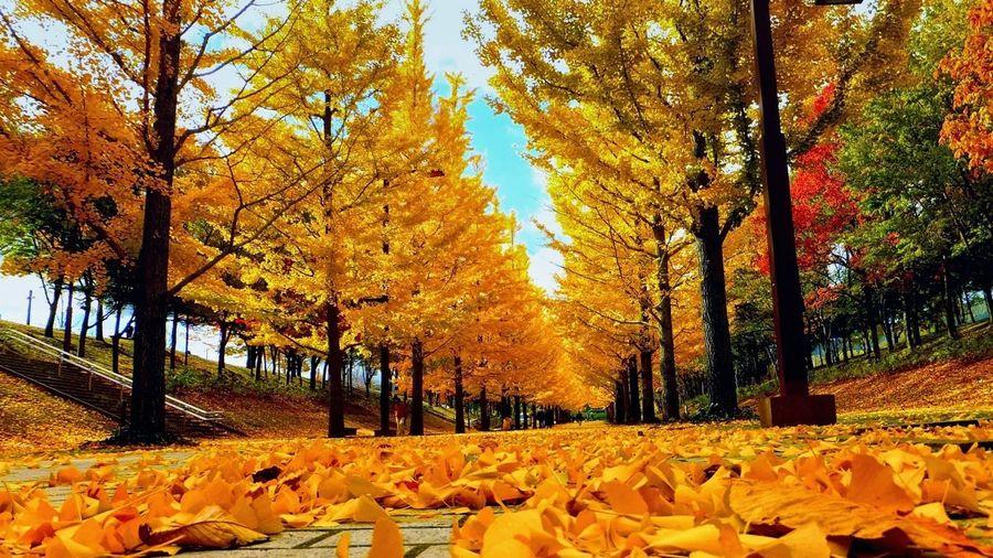 Vì sao lá cây rụng và chuyển vàng vào mùa thu?