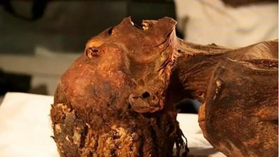 Phát hiện rùng rợn về những cái chết bí ẩn thời Ai Cập cổ đại