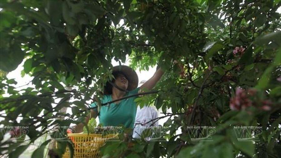 Tăng thu nhập nhờ gắn phát triển nông nghiệp với du lịch sinh thái