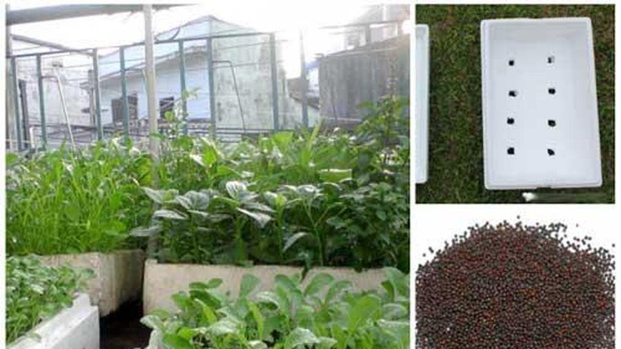Mách bạn bí quyết trồng rau bằng thùng xốp vừa xanh vừa ngọt, ăn quanh năm không hết