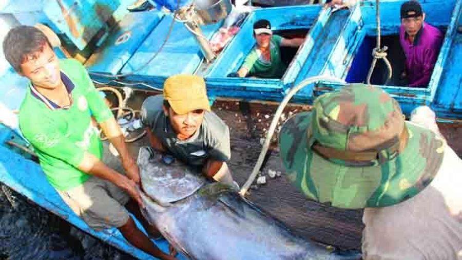 Thu phí thẩm định xác nhận nguồn gốc nguyên liệu thủy sản: VASEP cần phản ánh khách quan, trung thực